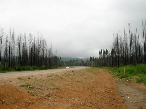 Дорога в Усть Баргузин порой представляет собой угрюмое зрелище. Мертвый лес на болоте, комары, хмурое небо - один из ликов Сибири.