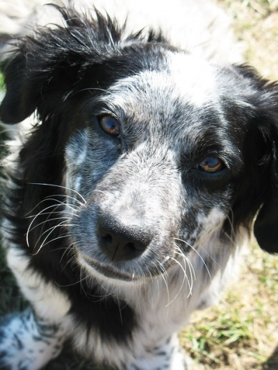 Собака из деревни Курбулик.