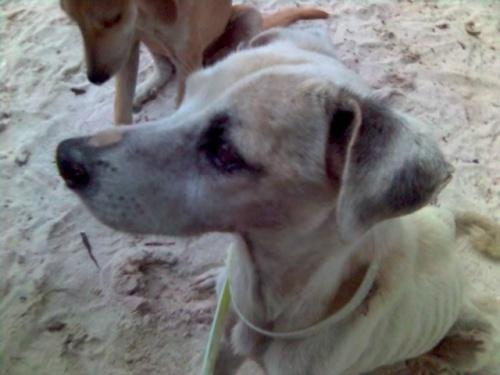 Самая взрослая собака из больше десяти-у нее больше 15 лет и уже ощущался возраст-имела какие-то проблемы-вроде Альцхаймер