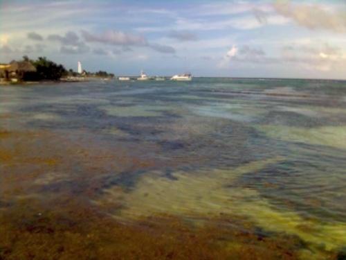 Море такой цвет имеет, потому что сейчас цветут какие-то морские травы-и запах особы есть.