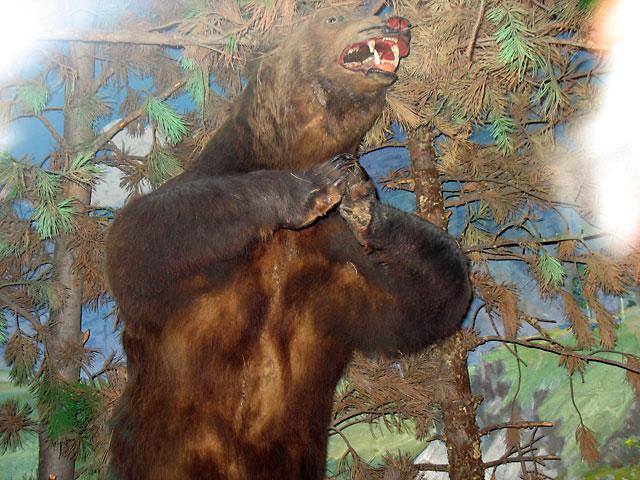 Улан-Батор. Набожный медведь. Краеведческий музей