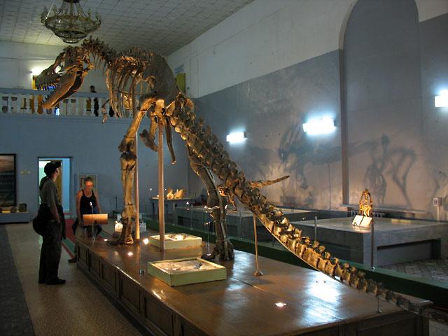 """А вот и динозавры! Знакомьтесь: Тарбозавр - """"жемчужина"""" коллекции Краеведческого музея"""