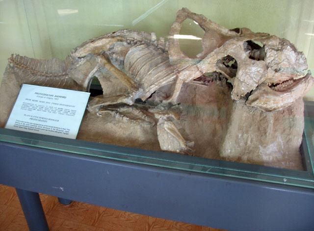 Протоцератопс. Похож на адскую собаку с клювом, по счастью, травоядную