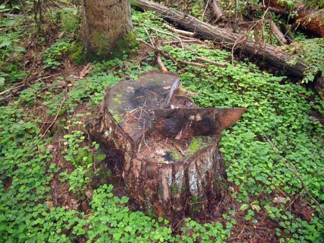 Деревянный арбуз :)