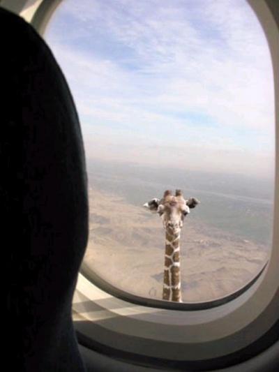 Где-то над Африкой
