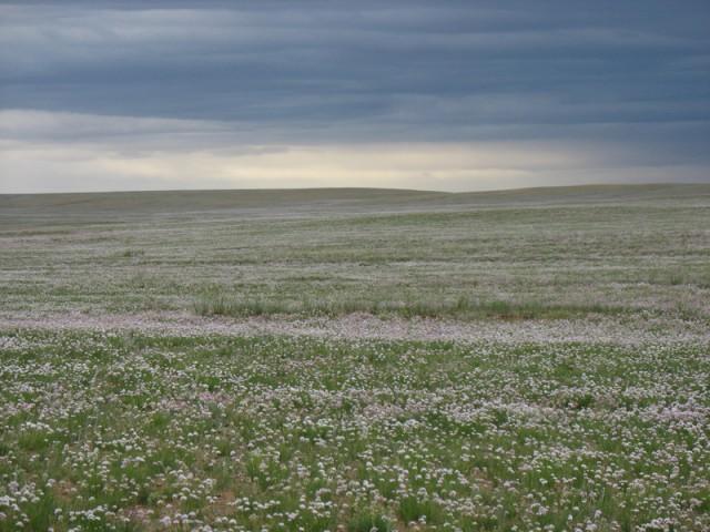 Монголия: Небо, земля, пространство