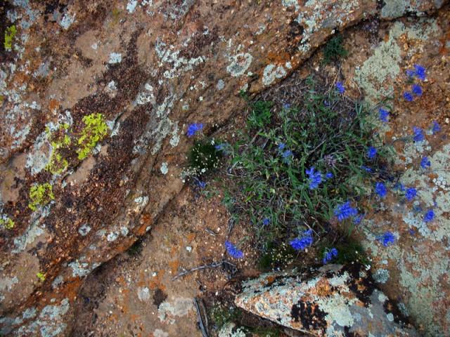 Цветы и цвета. Монголия. Священные скалы Бага Газрын Чулуу