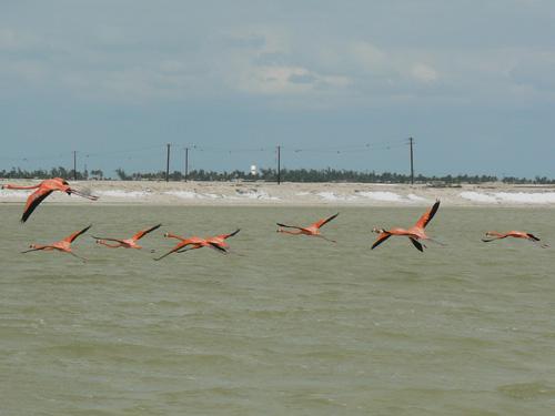 И не допускают ближе-эти фотки делал с дистанция больше 200 метра и когда приблизились-взлетели.