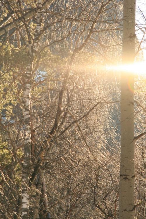 Солнечный хоровод