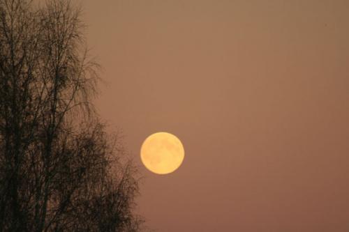 Теплая луна