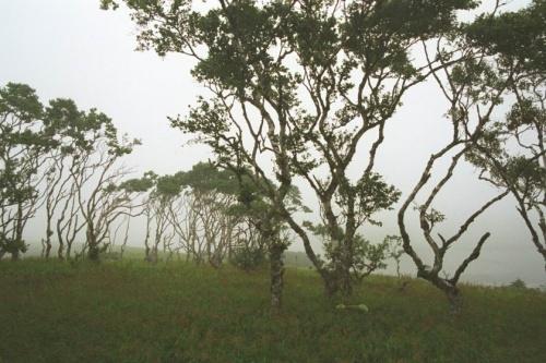 сразу за деревьями бухта дельфинья больше похожая на запруду :)