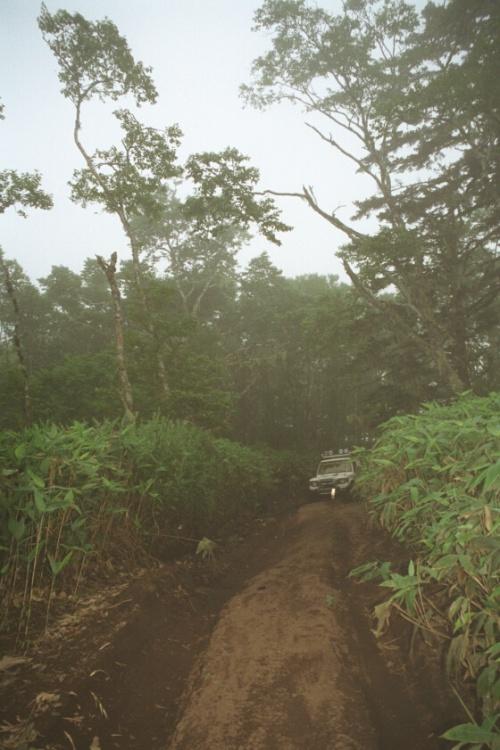 дорога в бамбуках к бухте Дельфинья