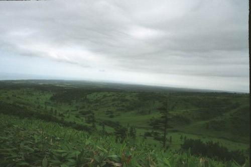 бамбучные поля