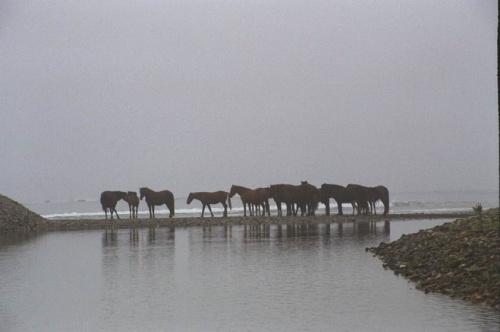 лошади в дельте реки Филатовки впадающей в океан