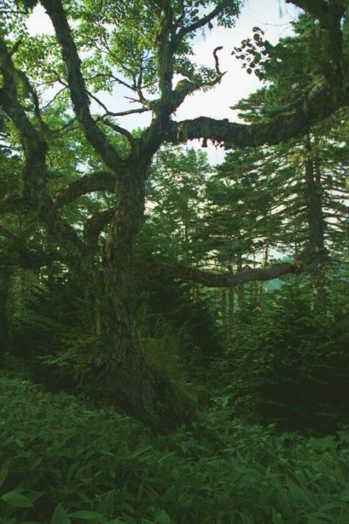 леса для настоящих хоббитов