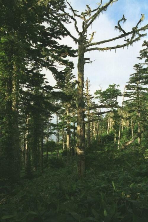 леса сфотканы в момент облезания сопки