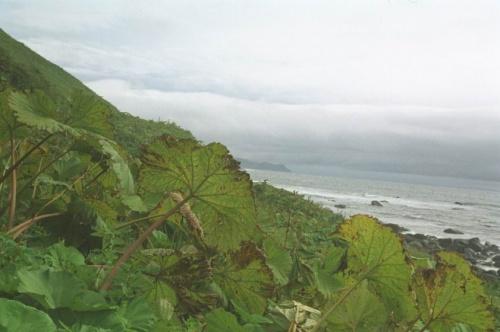лопухи и океан наш базовый лагерь под Тятей