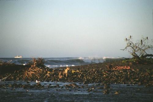 маленький серенький на фоне океанских волн и речки