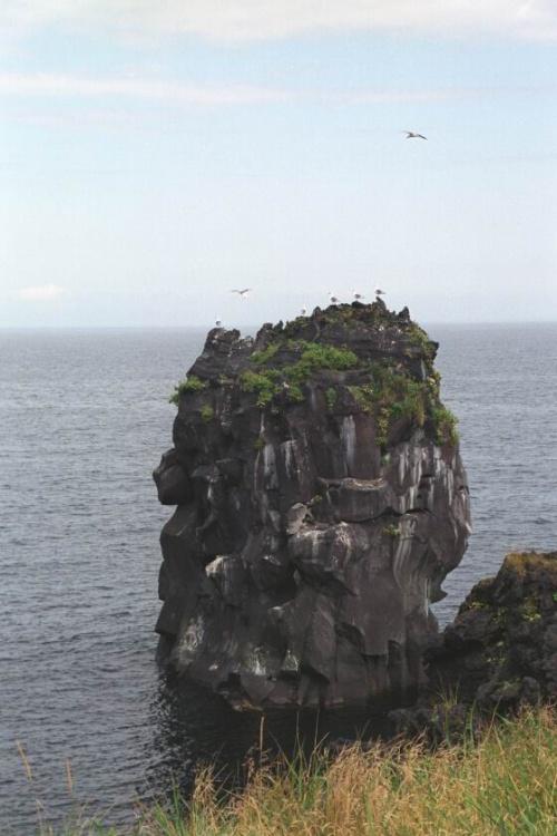 птичий базар,посмотрите как сидят чайки,словно флюгеры на башне