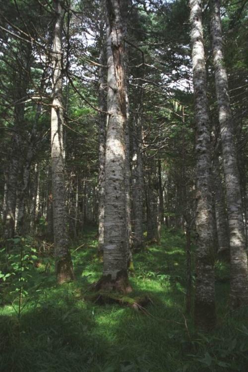 лес сказочный