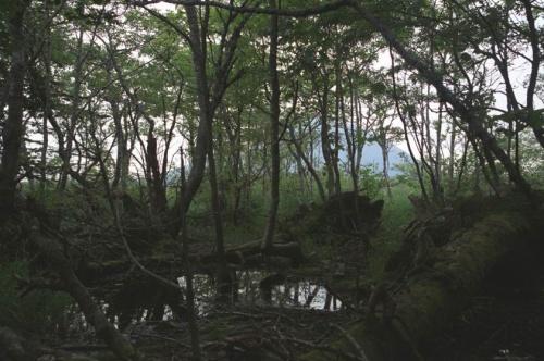 болото тоже сказочное