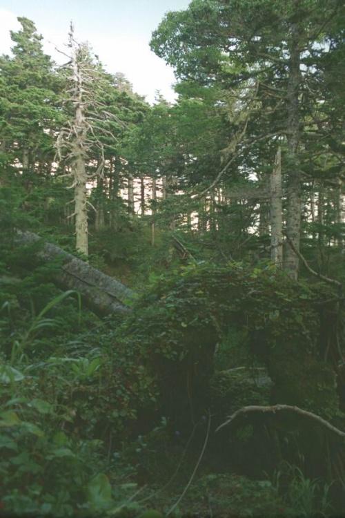 сказочный лес и сказочный бурелом...поросший клоповкой...и карабкаться там как в сказке...чем дальше тем страшнее :)