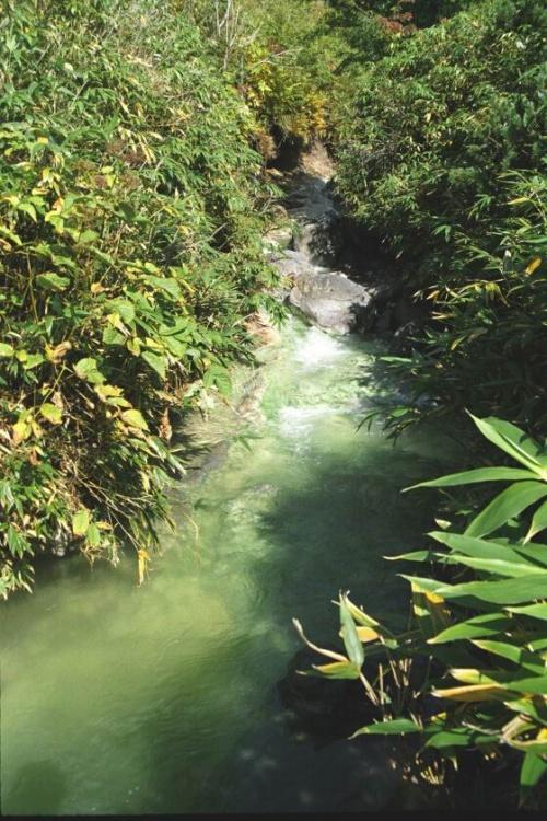 Бирюза кислого ручья и зелень зарослей бамбука