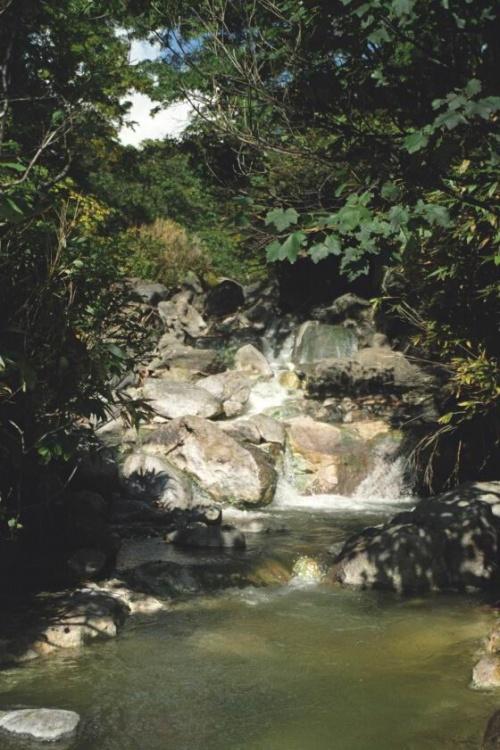 наверное так выглядел рай...теплые ручьи и буйная зелень