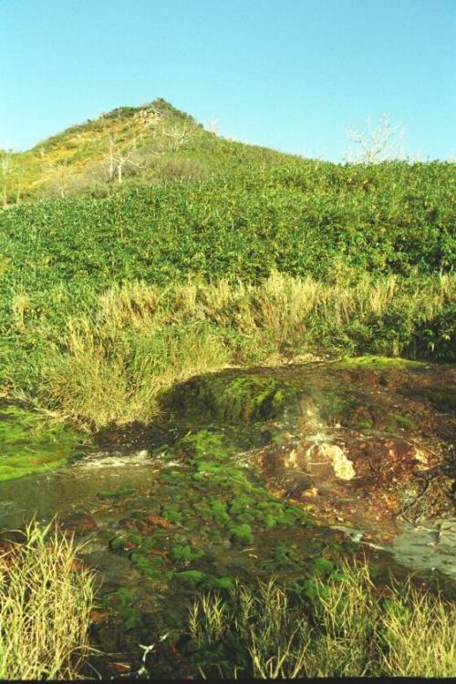 термальные водоросли