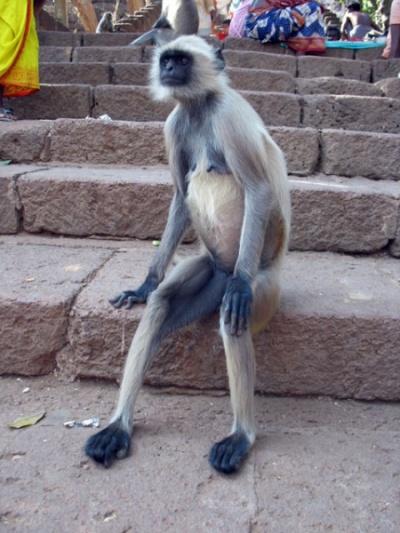 Хорошо сидит... Бхуванешвар