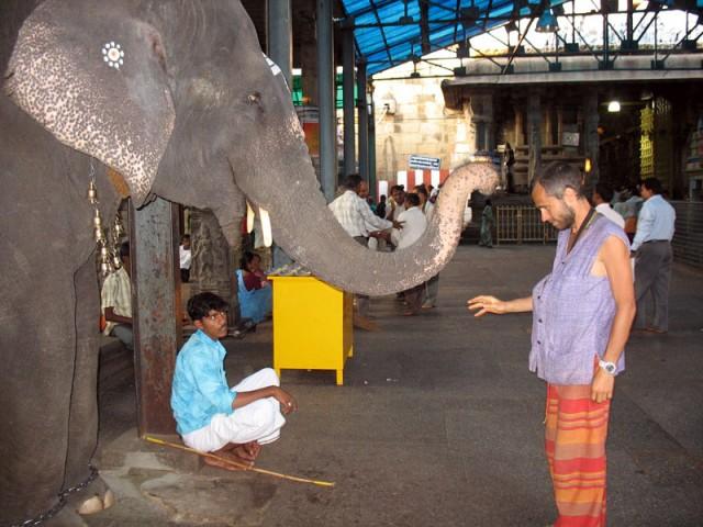"""""""Здравствуй, Муни! Дай-ка я тебя благословлю."""". """"Здравствуй, слон. Только сильно не бей"""". Шрикалахасти"""