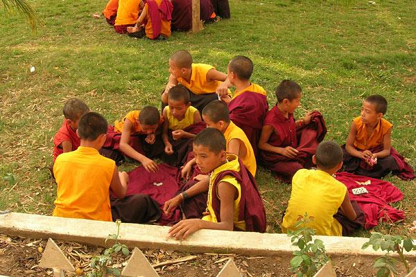 тибетские монахи играют в карты на деньги!
