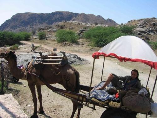 сафари на верблюде