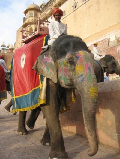 Вьезд на слоне  через парадные ворота