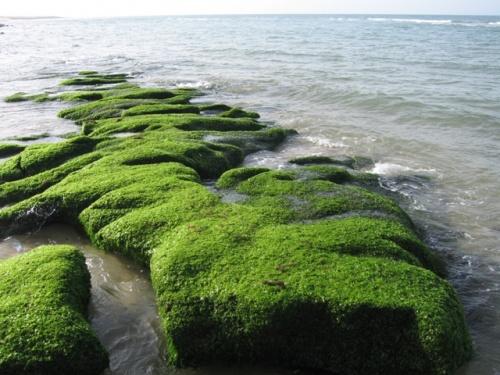 покрытые водорослями останки древних цивилизаций