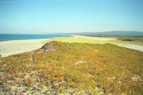белизна песка зелень травы и синева моря