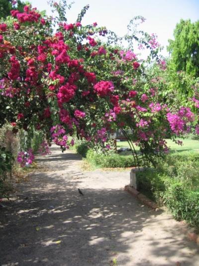 сады Виктории