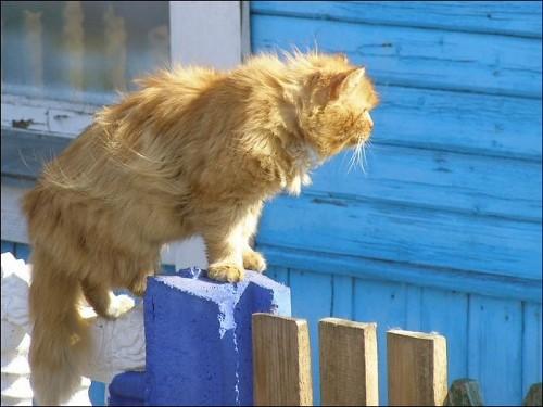 Типа во дворе смотрящий