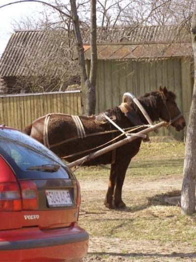 Машинка – машинкой, а лошадка – лошадкой