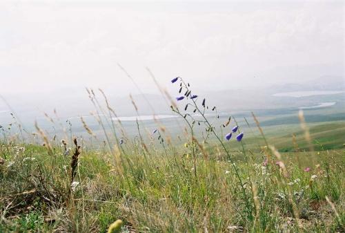 Степная трава