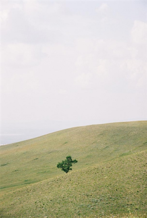 Одинокое