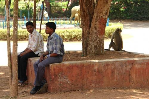 Обезьяны в зоопарке ходят сами по себе