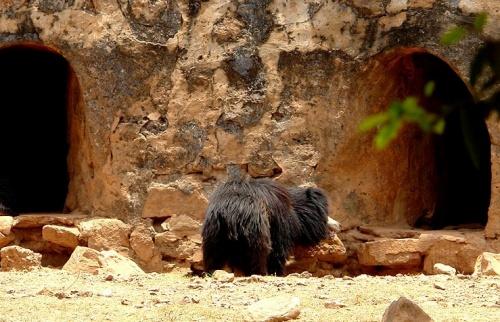 Страшный медведь (все время чесал голову)