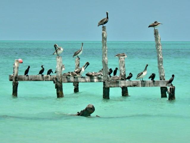 Отдыхающие птицы.