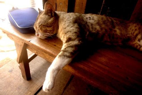 Пурийская кошка