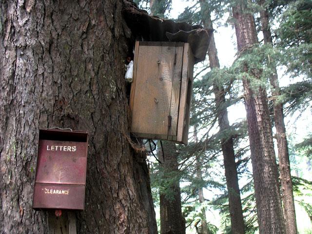 Лесная почта