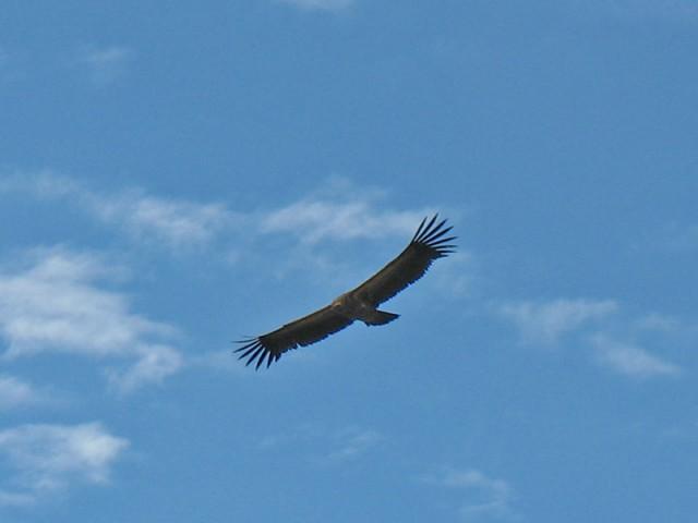 Орел над головой