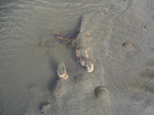 На Мумбайском побережье..