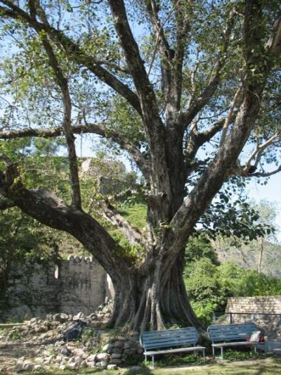 Дерево пилу
