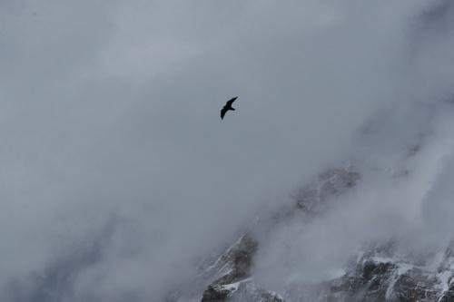 Одинокий полет